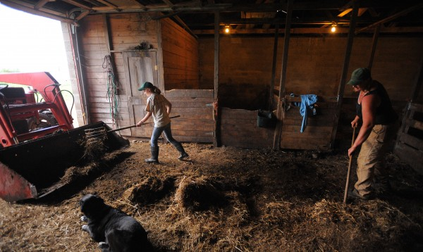 Edith Tierney (left) and her mother Hanne clean out one of the barns on a mid-June morning at Cornerstone Farm in Palmyra. Edith is 10 years old and helps out a great deal. After the end of the school year she spends a lot of time working with her mom.  Hanna's husband Dan - who works off the farm - took Edith camping last month but Hannah could not leave for several days.