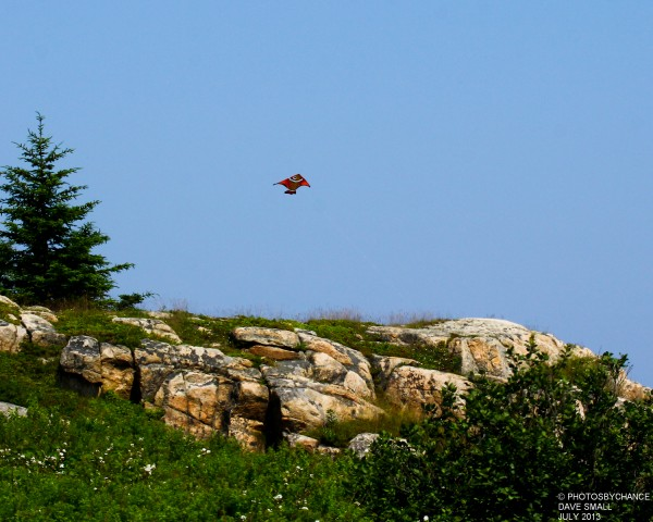 Flying fish? Just a kite.