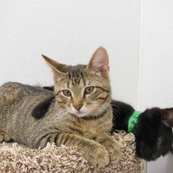 Kittens LJ and Shiloh are waiting for you at CHS!