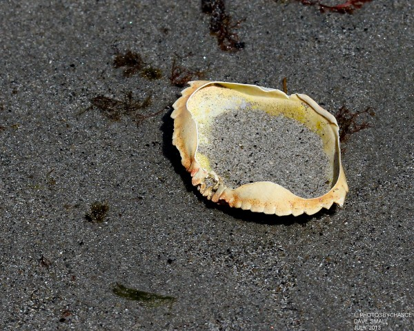 Sand crab?