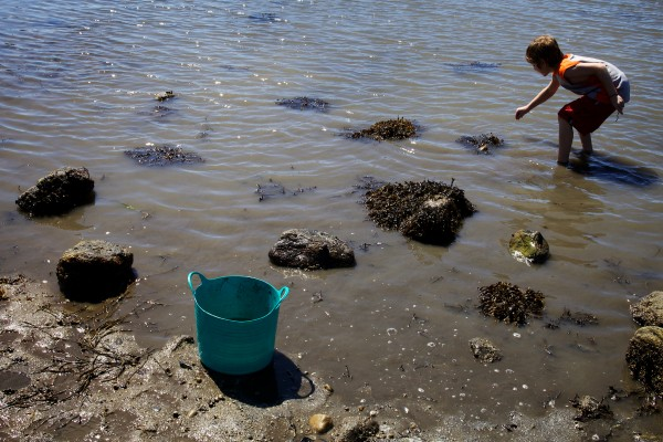 Sean Marston, 9, looks for sea creatures at low tide on Hendricks Head Beach in Southport Thursday. The beach is private, but the town may soon acquire it to preserve public access.