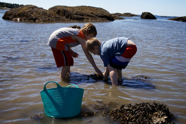 Brothers Sean, 9, (left) and Aiden Marston, 8, look for sea creatures at low tide on Hendricks Head Beach in Southport Thursday. The beach is private, but the town may soon acquire it to preserve public access.