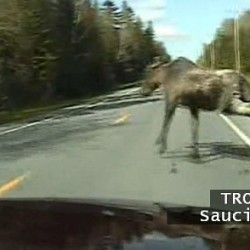 2 hurt in car-moose collision on turnpike