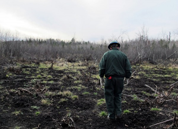 Jeff Seefeldt, district ranger for the U.S. Forest Service, walks through a field that was clear cut by marijuana growers who planted thousands of marijuana plants next to the south branch of the Oconto River, a Class A trout stream in Wisconsin, October 30, 2012.