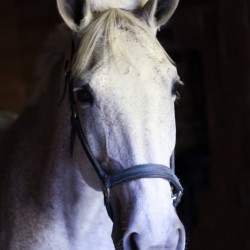 Don't bug me: Horses need your help
