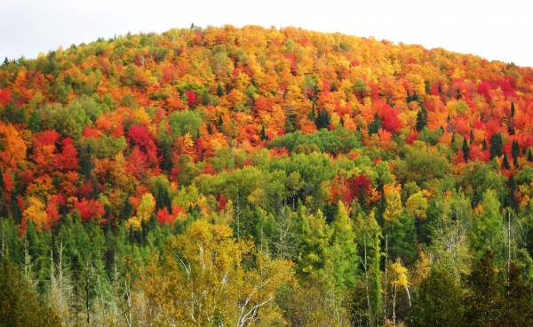 Fall colors peaking in the St. John Valley in 2010.