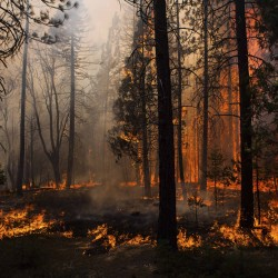 Yosemite blaze rages closer to reservoir for San Francisco