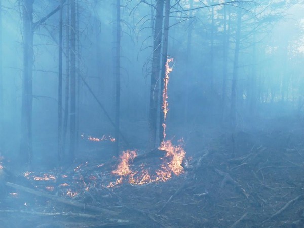 A few trees burn in Ebeemee Township in Piscataquis County after a lightning strike caused a forest fire on Sunday afternoon.