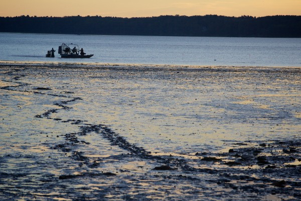 Local law enforcement, scientists and volunteers build three green crab exclusion pens at the Freeport end of Maquoit Bay Friday morning around low tide. The pens will keep invasive green crabs out and give eelgrass inside a chance to grow.