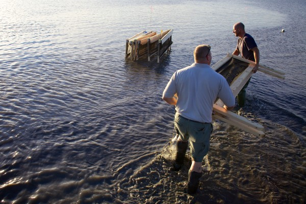 Brunswick Marine Resources Officer Dan Devereaux (left) and clammer and volunteer Chris Green get ready to assemble crab exclusion pens at the Freeport end of Maquoit Bay Friday morning.