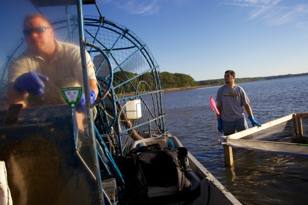 Brunswick Marine Resources Officer Dan Devereaux pilots an airboat at the Freeport end of Maquoit Bay Friday morning as he and a team of volunteers and scientists build crab exclusion pens.