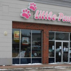 Scarborough pet store under quarantine for second time after puppy catches potentially deadly virus