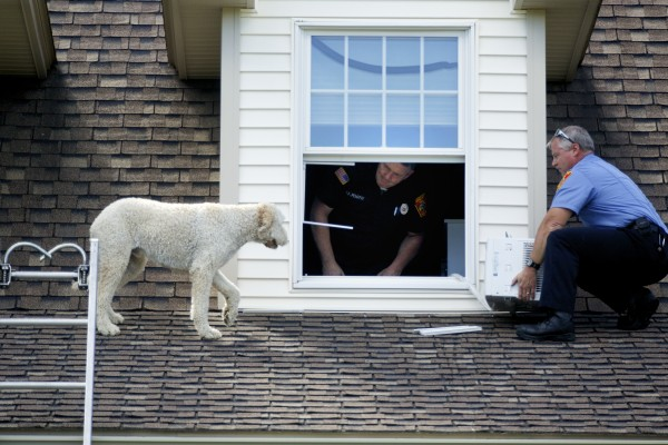 Brewer firefighter Kevin Pelotte and Brewer Fire Capt. Chris Dore help a dog off a roof at a home in Brewer on Thursday.