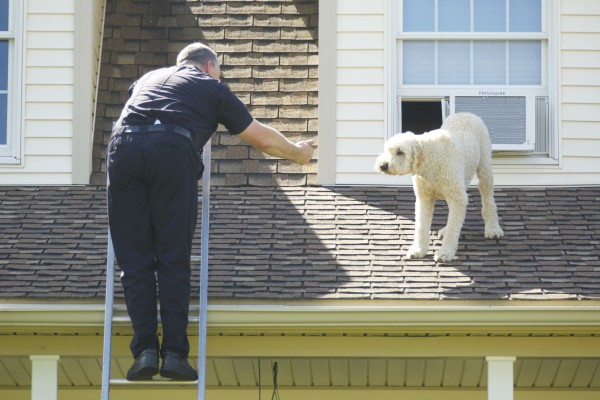 Brewer Firefighter Kevin Pelotte reaches out to a dog that crawled through the side of an air conditioning unit onto the roof of a home at 155 Oak Grove Drive in Brewer on Thursday.