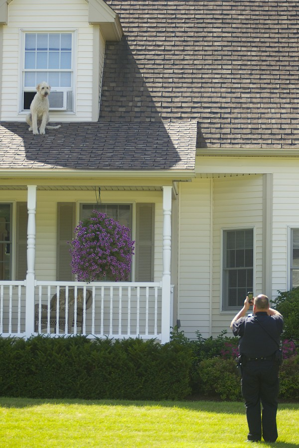 A dog crawled onto the roof of a home at 155 Oak Grove Drive in Brewer on Thursday.