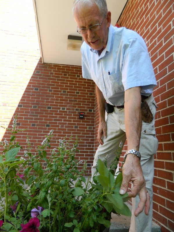 Phil Taschereau, landscaping head at the University of New England in Biddeford, takes stock of a plant arrangement placed outside one of the school's dormitory buildings.