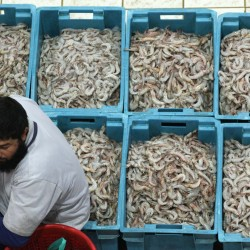 Seafood study: Up to 32 percent imported to US is caught illegally