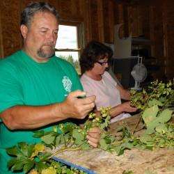 Experiment in hops leads to family venture in Aroostook