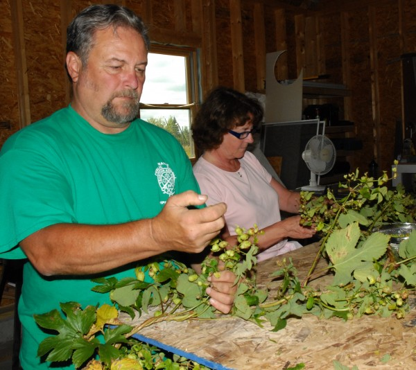 Chris Gee and Jay McDougal drove more than three hours Sunday to attend the hops harvesting party at Aroostook Hops this weekend. About 25 volunteers gathered at the Westfield farm to help out in the annual harvest.