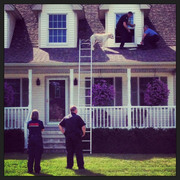 Emergency responders retrieve a poodle from the roof of a Brewer home Thursday.