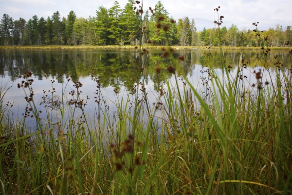 Tall grasses grow at Twin Ponds in northern Penobscot County where Elliotsville Plantation Inc. has opened 40,000 acres to hunting and other recreational use.