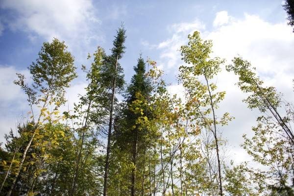 A variety of trees grow on the property where Elliotsville Plantation Inc. opened 40,000 acres to hunting and other recreational use.