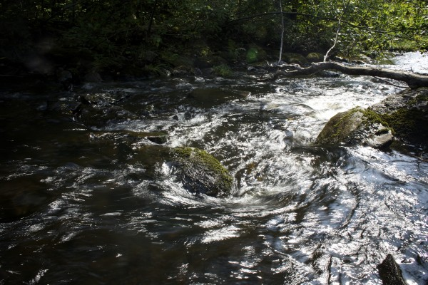 Kimball Brook flows through a part of Township 4 where Elliotsville Plantation Inc. has opened 40,000 acres to hunting and other recreational use.