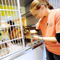 Lewiston animal shelter sees surge in adoptions