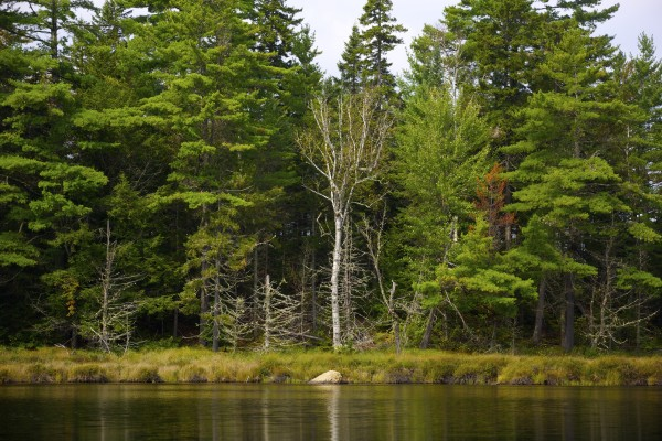 Twin Ponds is one of the many bodies of water in northern Penobscot County where Elliotsville Plantation Inc. has opened 40,000 acres to hunting and other recreational use.