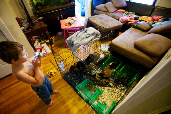 Hector Badillo, 5, takes pictures of the family guinea pigs while his sister Marianna Torres, 3, snoozes on the couch in Augusta.