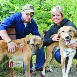 Mainer's mission gives war zone dogs a home