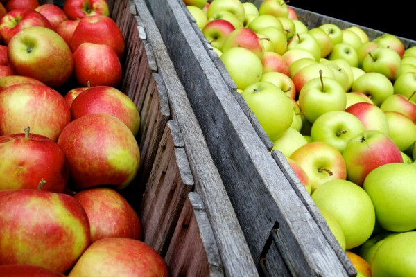 Crates of honey crisp and golden supreme apples sit in crates at Gile's Family Farm in Alfred Tuesday.