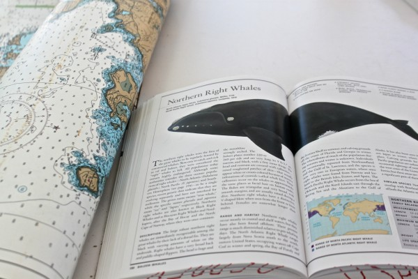 A map of Mount Desert Island is rolled up beside the National Audubon Society &quotGuide to Marine Mammals of the World,&quot which is opened to the North Atlantic right whale, aboard the College of the Atlantic research vessel, Osprey, on Sept. 19, 2013.