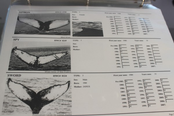 The Allied Whale &quotHumpback Whale Catalogue of 2007&quot is on display in the cabin of the Osprey, College of the Atlantic's research vessel that started offering whale-watching tours during the summer and fall of 2013. The catalog identifies thousands of humpback whales by distinct patterns on their tails.