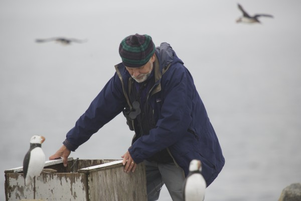 Steohen Kress, the founder of Project Puffin, checks a puffin trap on Eastern Egg Rock off the coast of Maine in July.
