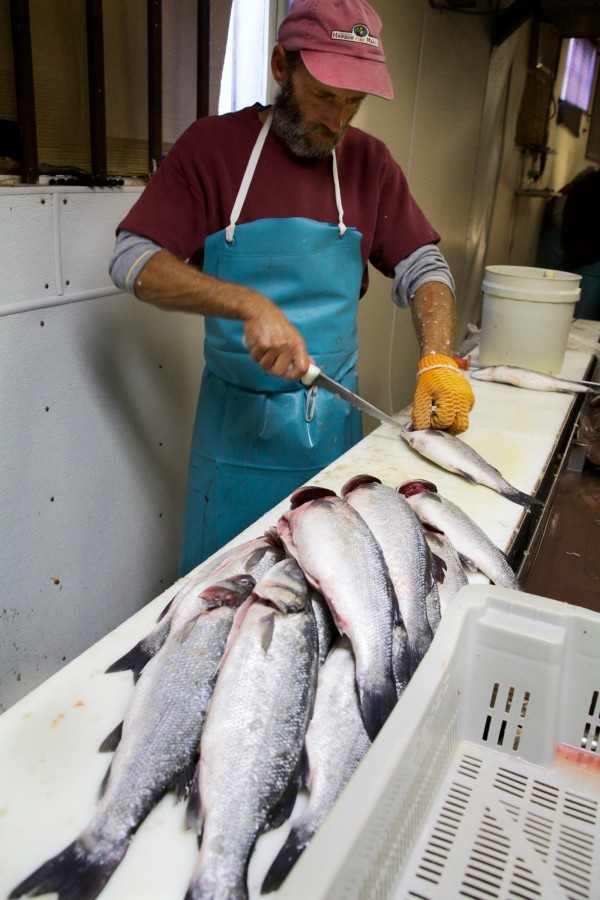 Ron Brown cuts fresh fish at Harbor Fish Market on Custom House Wharf in Portland Wednesday.