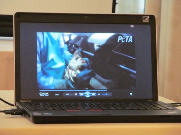 A laptop set up at a PETA news conference in Portland Tuesday shows what the organization says is footage of lobsters and crabs being inhumanely treated at a Rockland processing facility.