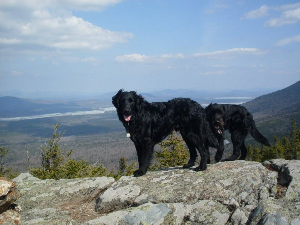 Monty and max, both goldendoodles from Clinton, hike to Cranberry Peak, March 2012.