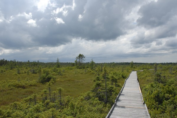 Rain-laden clouds sweep toward the Orono Bog and its boardwalk on a warm, moist summer afternoon in late July.