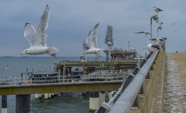 Seagulls are seen perched and in flight at the offshore unloading pier at Dominion Cove Point LNG Terminal in October in Lusby, Md.