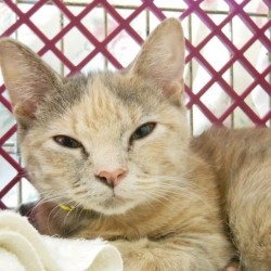 Rescued cats up for adoption in Brunswick