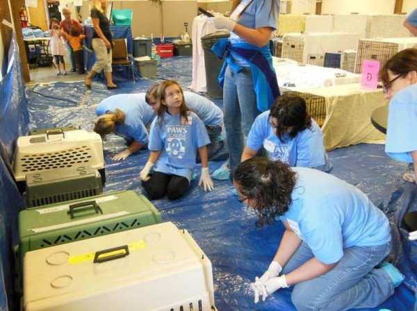 Volunteers prepare cats rescued in Freeport for examinations on Sunday at the Coastal Humane Society, 190 Pleasant St., Brunswick.