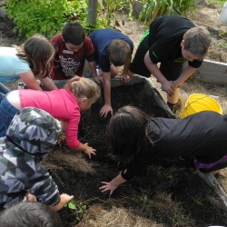 Belfast students learn about gardening