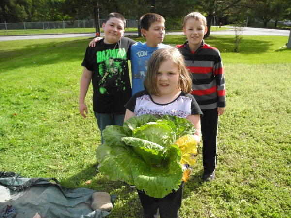 Second grader Alexis Smith harvested a cabbage nearly as big as she was Thursday at the Edna Drinkwater Elementary School's Harvest Day.  Fifth graders Issac Ernst, (left), Matt LeBlanc and Robert Hicock pose behind her.