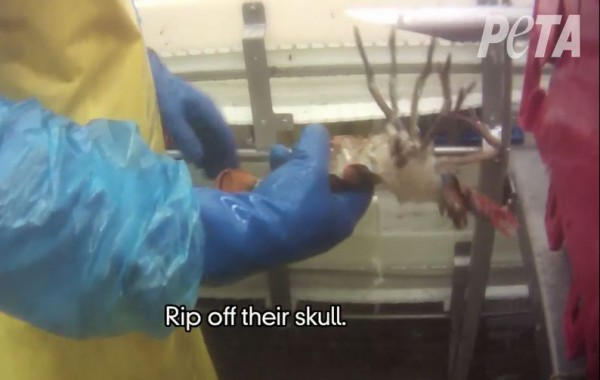 A video screenshot from PETA.