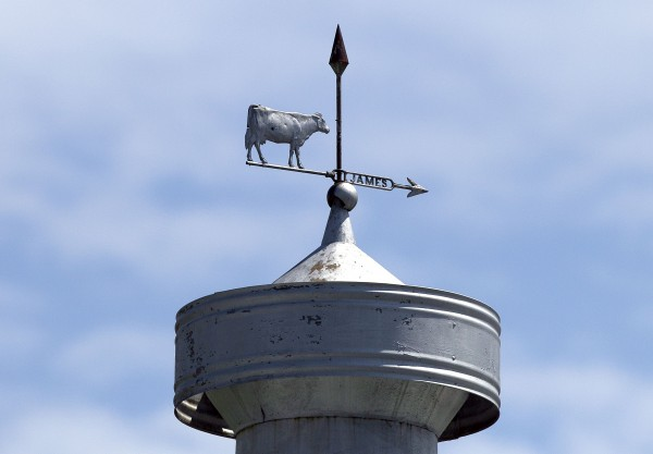 A cow weather vane on a barn in Brunswick.