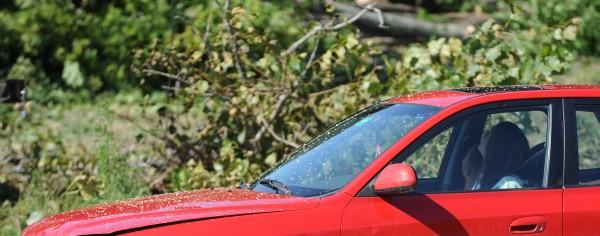 Occupants of a wood chip-covered car watch through the sunroof as men with chainsaws lop off limbs of a cottonwood tree in Orono. The tree was removed on Tuesday to make way for a credit union.