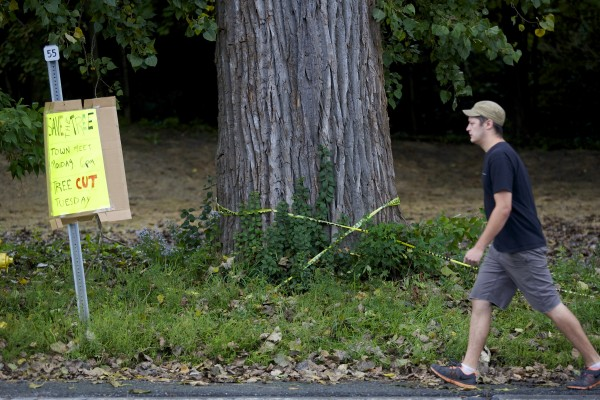 Some Orono residents are protesting the removal of an old cottonwood tree on Main Street in Orono.