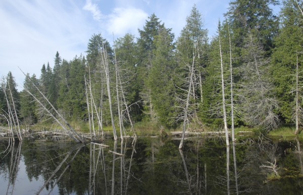 A beaver pond reflects the forest and sky alongside the Lagrange-Medford Multi-Use Trail, a recreational trail at follows the Bangor & Aroostook Railroad's former Medford Cutoff from South Lagrange to Medford.