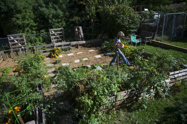 Tracy Knable gathers vegetables from her home garden on Sept. 24, 2013 in Hagerstown, Md.